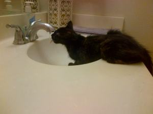 Blanche at the faucet.